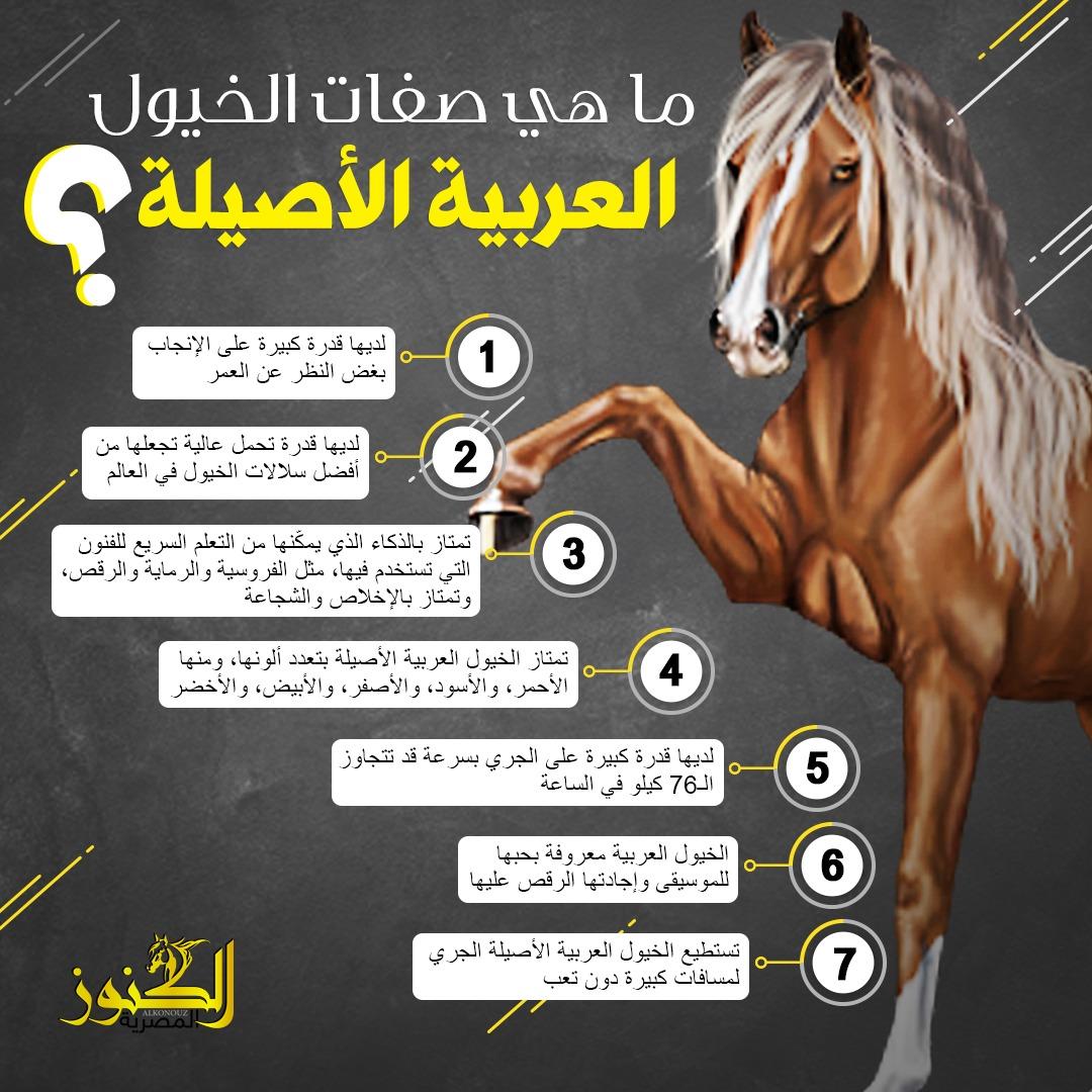 صفات الخيول