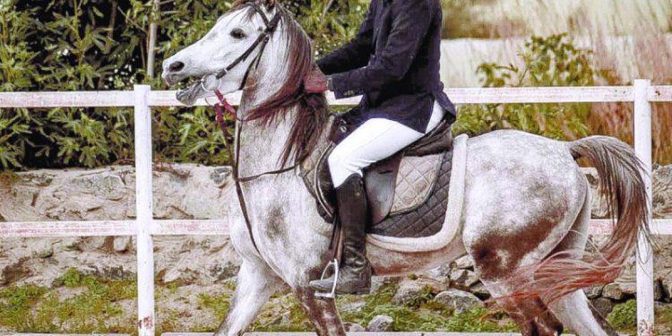 قسم لتدريب السيدات على ركوب الخيل في نادي عسير للفروسية الكنوز المصرية