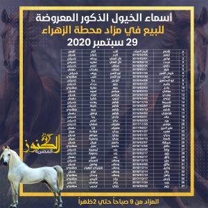 قائمة الخيول المشاركة بالمزاد