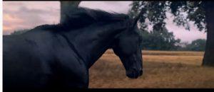حصان لويدز